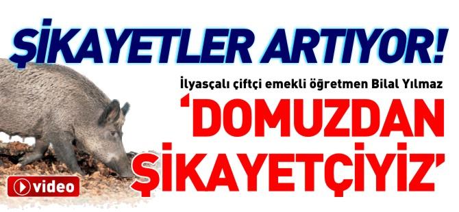 'DOMUZDAN ŞİKAYETÇİYİZ'