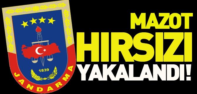 MAZOT HIRSIZI YAKALANDI