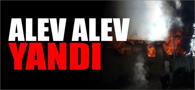 ALEV ALEV YANDI