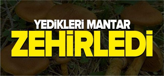 YEDİKLERİ MANTAR ZEHİRLEDİ