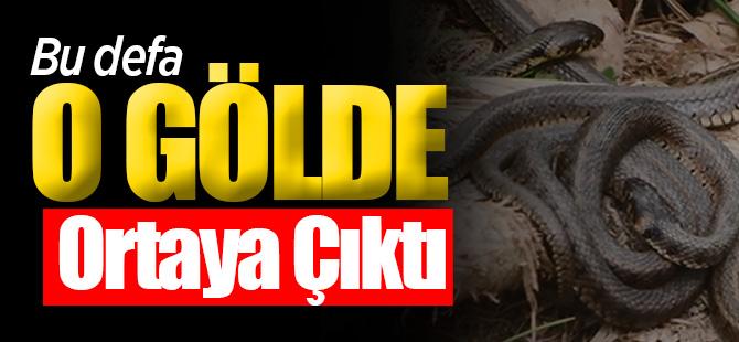 Yılanlar bu defa da Uluabat Gölü'nde ortaya çıktı