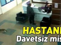 HASTANEDE DAVETSİZ MİSAFİR