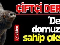 'DEVLET DOMUZUNA SAHİP ÇIKSIN'