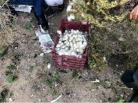 İnhisar'da ipek böcekçiliği yeniden hayat bulacak