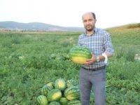 Osmaneli karpuzunun hasadı başladı