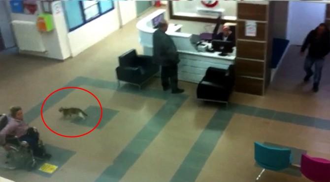 hastaneye-kedi-girdi.jpg