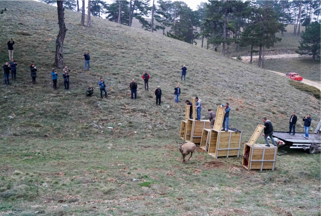 kizil-geyikler-bilecikte2.jpg